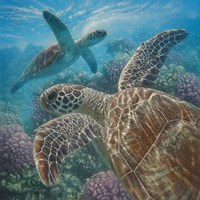 Sea Turtles - Turtle Bay - Square Fine-Art Print