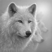 Arctic Wolves - Whiteout - B&W Fine-Art Print