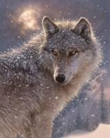 Lone Wolf Fine-Art Print