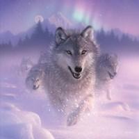 Running Wolves - Northern Lights - Square Fine-Art Print
