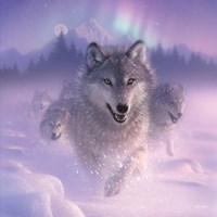 Running Wolves - Northern Lights - Square Fine-Art Print