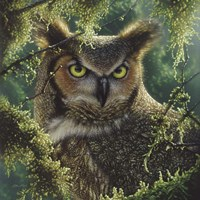 Great Horned Owl - Watching and Waiting Fine-Art Print