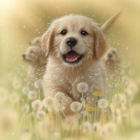 Golden Retriever Puppy - Dandelions - Square Fine-Art Print