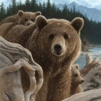 Brown Bears - Backpacking - Square Fine-Art Print