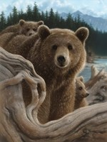 Brown Bears - Backpacking Fine-Art Print