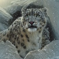 Snow Leopard - The Fortress Fine-Art Print