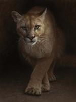 Cougar - Emergence Fine-Art Print