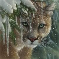 Cougar - Frozen Fine-Art Print