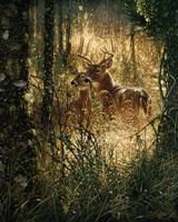 Whitetail Deer - A Golden Moment Fine-Art Print
