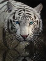White Tiger - Into the Light Fine-Art Print