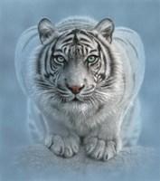 White Tiger - Wild Intentions Fine-Art Print