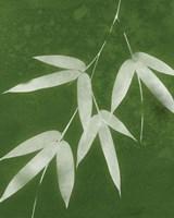 Green Spa Bamboo I Fine-Art Print