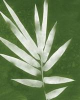 Green Spa Bamboo II Fine-Art Print