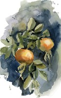 Peaches II Fine-Art Print