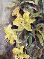 Day Lily Fine-Art Print