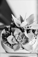 Succulents Fine-Art Print