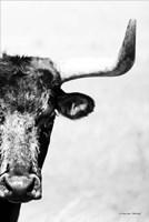 The Bull Fine-Art Print