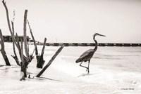 Shore Crane I Fine-Art Print
