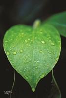 Green Leaf Fine-Art Print