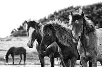 Horses Three Fine-Art Print