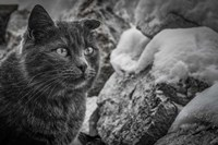 Cat and the Snow Fine-Art Print