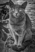 Cat Sitting on Rock Fine-Art Print
