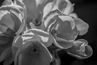 Monochrome Flower 05 Fine-Art Print
