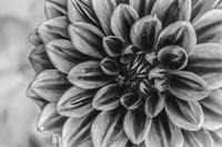 Monochrome Flower 70 Fine-Art Print