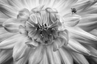 Monochrome Flower 78 Fine-Art Print