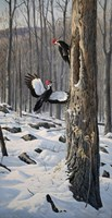Swooping In - Pileated Woodpeckers Fine-Art Print