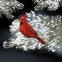 Night Cardinal Fine-Art Print