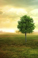 Lone Green Tree Fine-Art Print