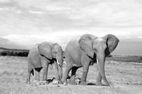 Elephant Mother Fine-Art Print