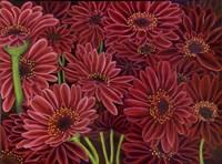 Gerbera Ruby Fine-Art Print