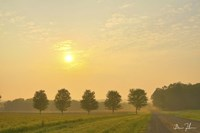 Country Morning Glow Fine-Art Print