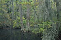Cypress Cove Fine-Art Print