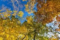 Autumn Colors Fine-Art Print