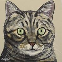 Cat Tabby Ontan Fine-Art Print