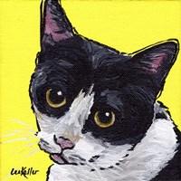 Cat Tuxedo Fine-Art Print