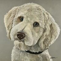 Goldendoodle On Gray Fine-Art Print