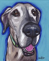 Great Dane Beau Fine-Art Print
