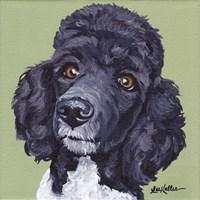 Standard Poodle Tommy Fine-Art Print