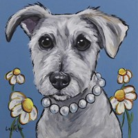 Schnauzer Daisy Fine-Art Print