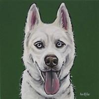 Husky Echo Fine-Art Print