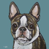 Sasha Boston Terrier On Teal Fine-Art Print