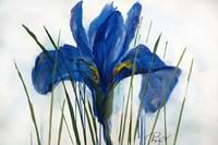 Iris Sings the Blues Fine-Art Print