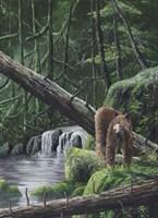 Deep Woods Fisherman Fine-Art Print