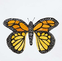 Butterfly Collection Monarch Fine-Art Print
