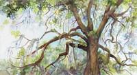 Southern Live Oak Tree Fine-Art Print