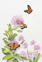 Milkweed and Monarch Butterflies Fine-Art Print
